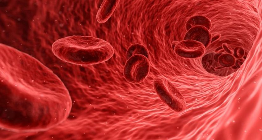 Human Blood Vessels Are Grown in Petri Dish For the First Time