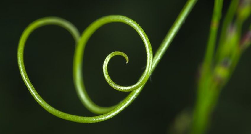 Tiny Soft Robots Similar to a Plant Tendril Are Created