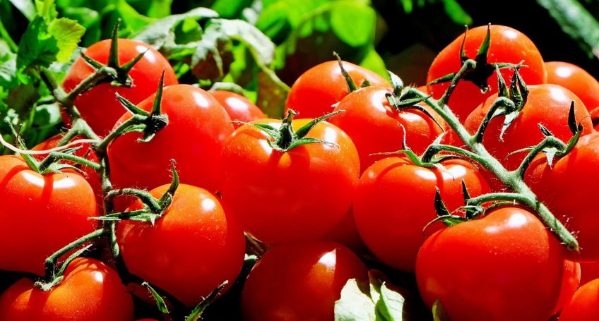 Cryptomatoes: Cryptomining and Agriculture